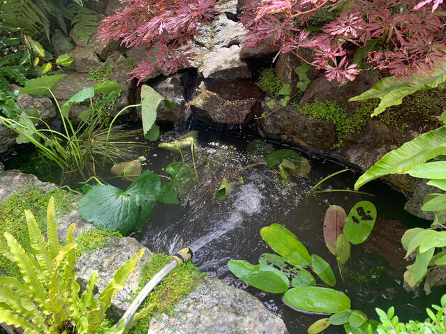Refilling newly cleaned small garden pond in Eastbourne