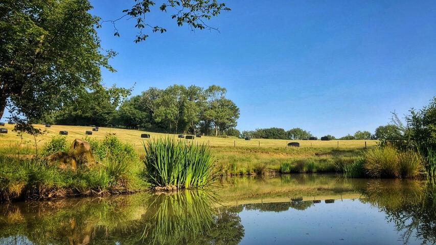 Beautiful sunshine over Herrings Farm lake